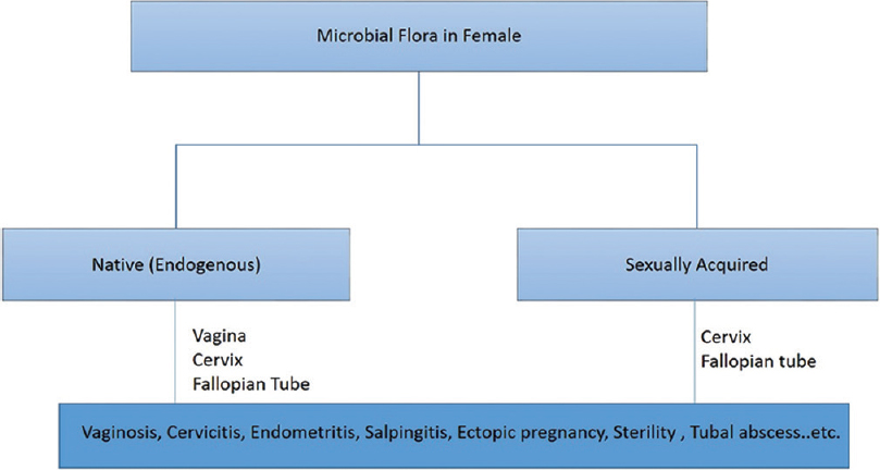 Figure 2: Flowchart showing the role of microbial flora in infection and other fertility related complications